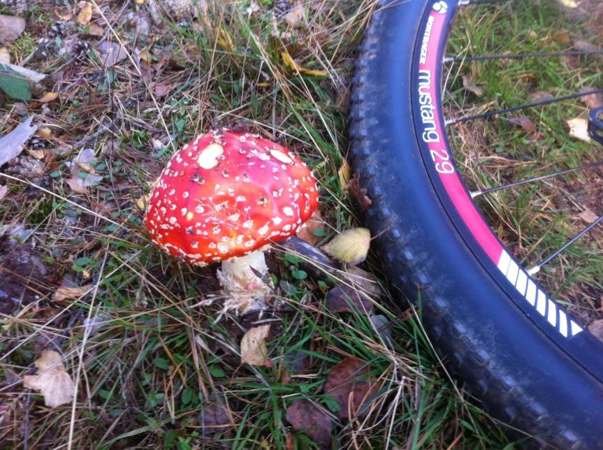 Sicher Radfahren im Herbst – ADFCSicherheitstips